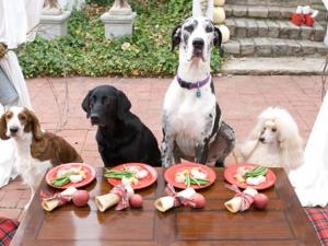 DogParties